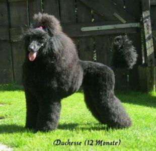 G-Duchesse1