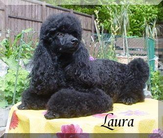 Laura24