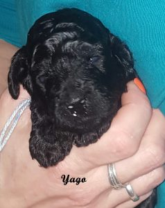 Yago drei Wochen