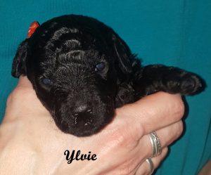 Ylvie drei Wochen