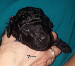 Yuma drei Wochen